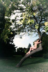 American Night On A Tree